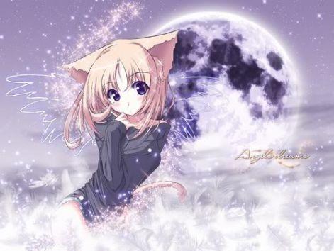cat.jpgx_xcv_ccv.jpg