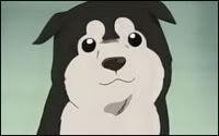 puppyonfma.jpg
